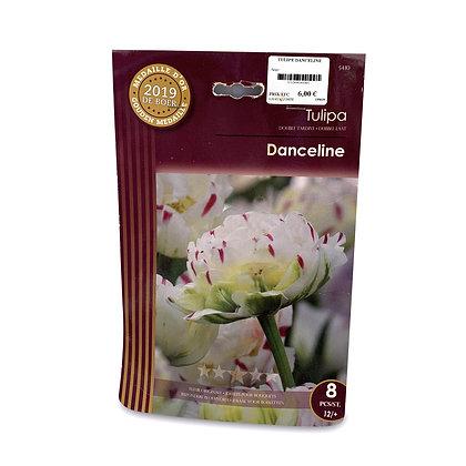 Tulipe danceline - bulbes