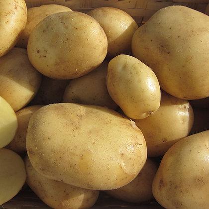 Plants de pommes de terre - Mandola