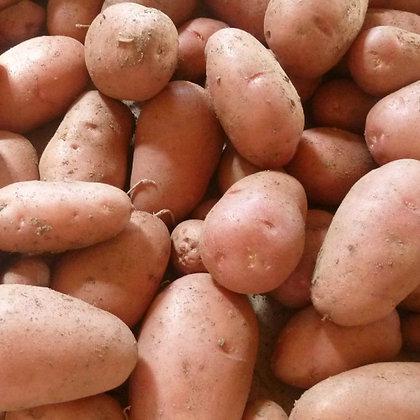 Plants de pommes de terre - Rosabelle