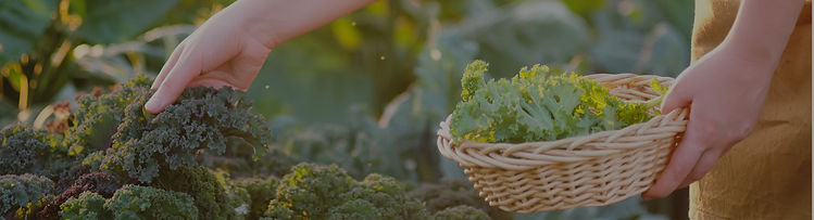 plantes_fleuries-04.jpg