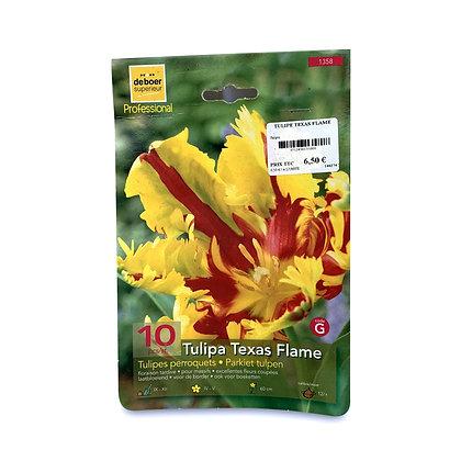 Tulipe texas flame - bulbes