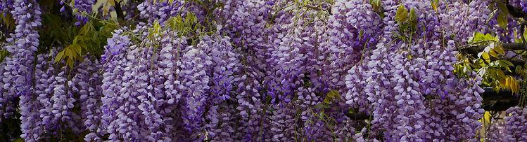 img_plantes_grimpantes-11.jpg