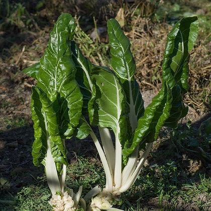 Légumes godets