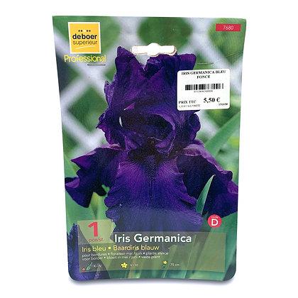 Iris germanica bleu foncé - bulbes