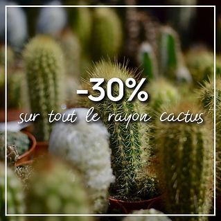 30%CACTUS-01.jpg