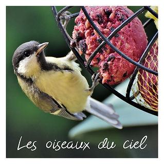 les_oiseaux_du_ciel-01.jpg