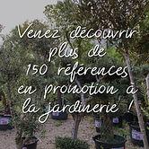 oliviers_promotion-13.jpg