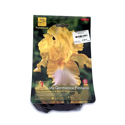 Iris germanica pinnacle - bulbes