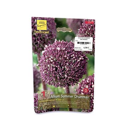 Allium summer drummer - bulbes