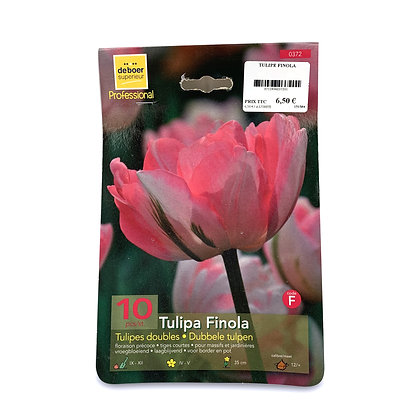 Tulipe finola - bulbes