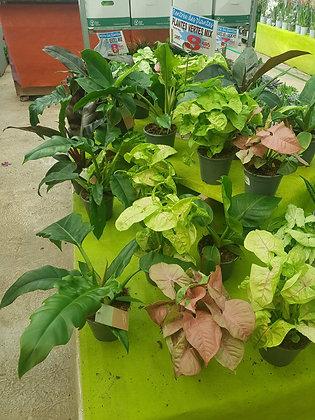 Plantes vertes mix