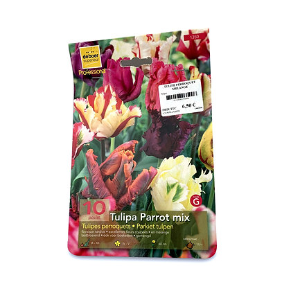 Tulipes perroquets mélange - bulbes