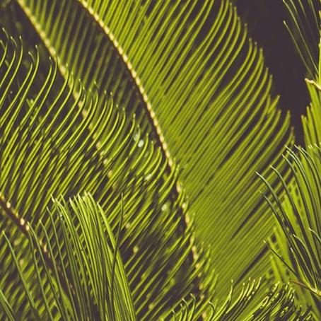 Top 10 des plantes pour terrains arides : le cycas