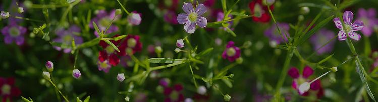 plantes_fleuries-05.jpg