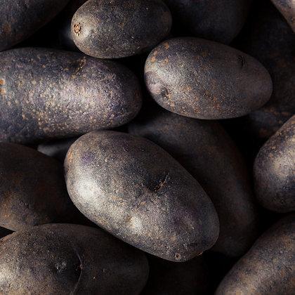 Plants de pommes de terre -Vitelotte