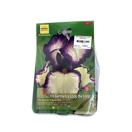 Iris germanica loop the loop - bulbes