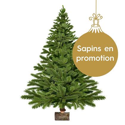 Sapin coupé - Nordmann PROMO