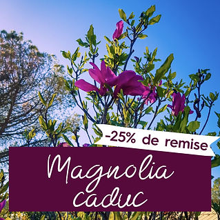 magnoliapromo-10.jpg
