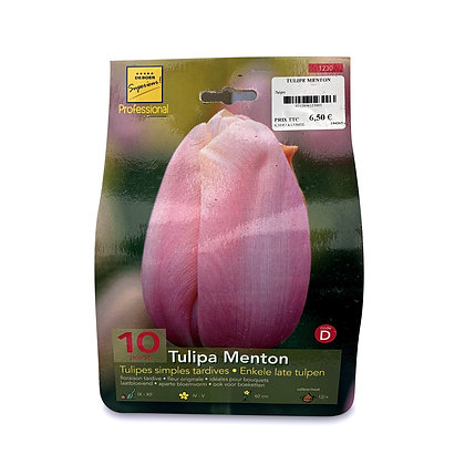 Tulipes simples tardives - bulbes