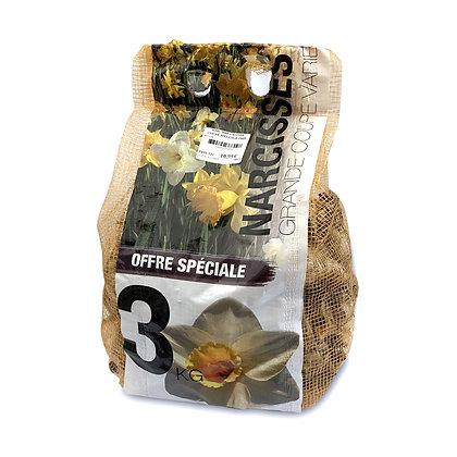 Narcisse grande coupe en mélange 3kg - bulbes