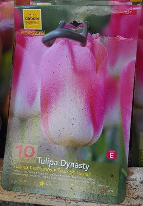 Tulipe Triomphe