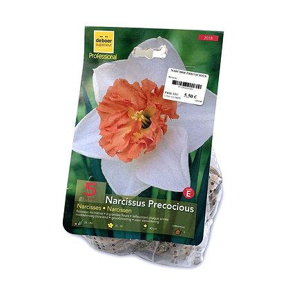 Narcisse precocious - bulbes
