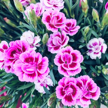 Les plantes  : symbole d'amour