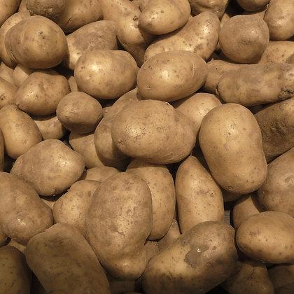 Plants de pommes de terre - Belle de Fontenay