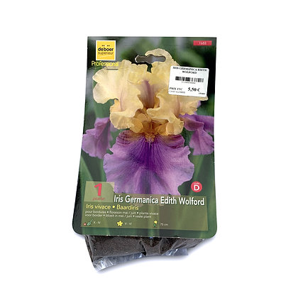 Iris germanica edith wolford - bulbes