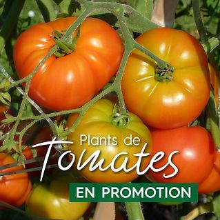 promo_tomate_vignette_Plan de travail 1.