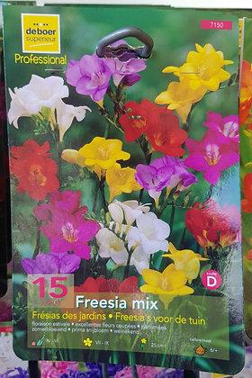 Freesia mix - Bulbes