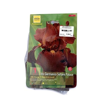 Iris germanica sultans palace - bulbes