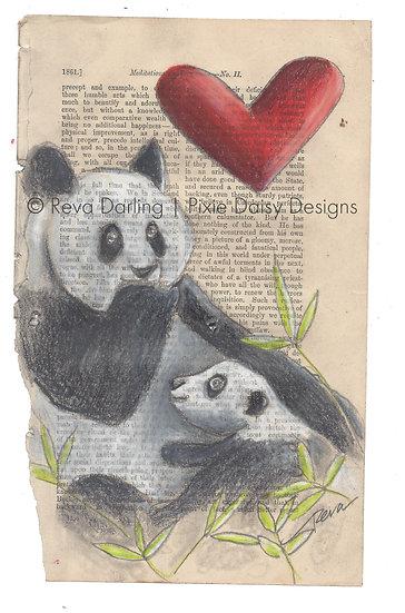 ANI-056_Amour de Panda
