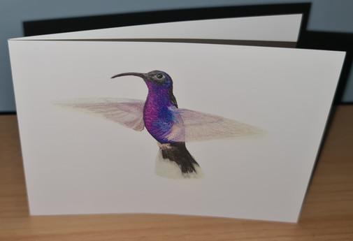 victor hummingbird card photo.jpg