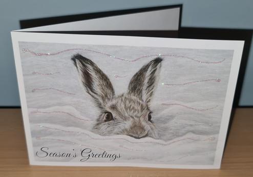 hare christmas card photo.jpg