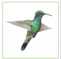 rico hummingbird card scan