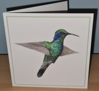 rico hummingbird card photo.jpg