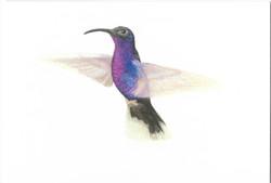 victor hummingbird card scan