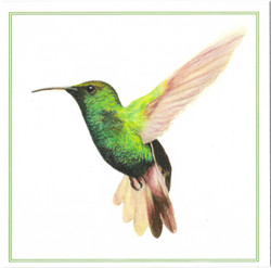 george hummingbird card scan