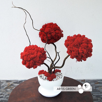 Трехствольное дерево из мха, топиарий red