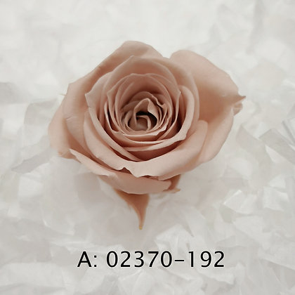"Роза ""Vivian"", А: 192"