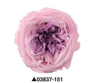 """Роза """"Blossom"""", 151, 6 бутонов"""