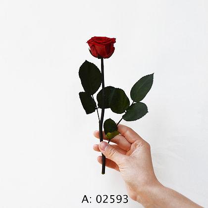 Красная роза на стебле, стабилизированная