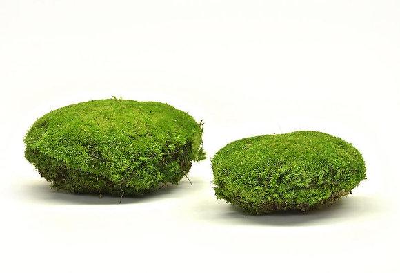 "Мох кочками от ""Artis Green"""