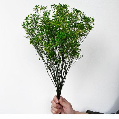 Гипсофила зеленая, стабилизированная