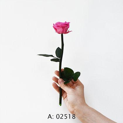 Розовая роза на стебле, стабилизированная
