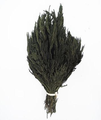 Плаун оливковый, А: 5280