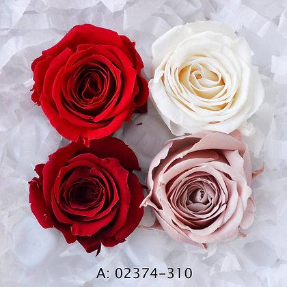 "Роза ""Vivian Color"", А:310"