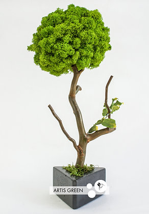 Дерево из мха, топиарий Fresh Wasabi 30 cm
