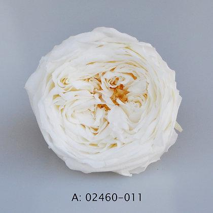 """Роза """"Темри"""", 011, 8 бутонов"""
